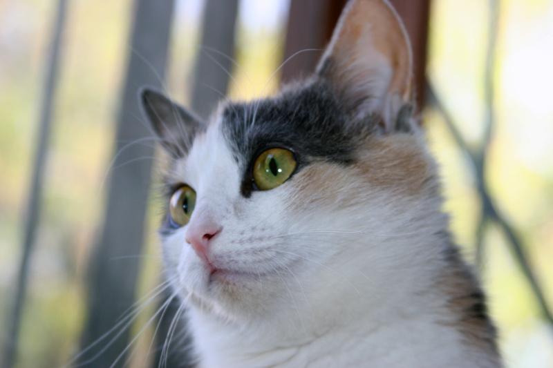 Что делать, если у кошки ожирение